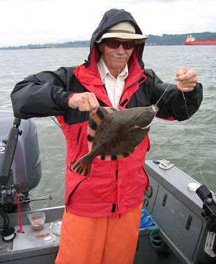 starry flounder caught near Astoria, Oregon