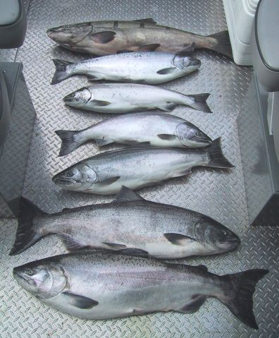 columbia river fishing guide, columbia river salmon fishing at its best!