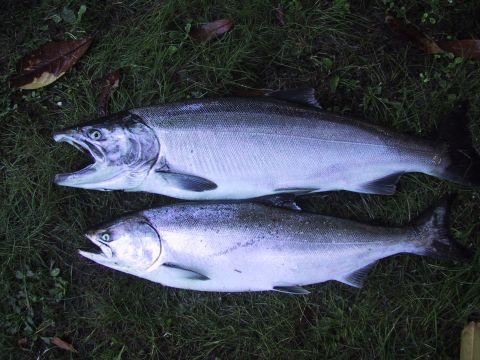 buoy 10 salmon fishing report
