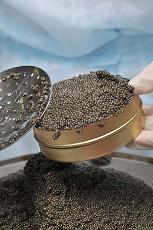 Sturgeon Caviar in a tin