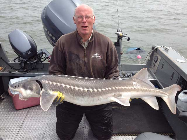 Guided sturgeon trips.