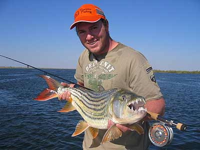 Tiger fish information about tiger fish for Tiger fish pictures