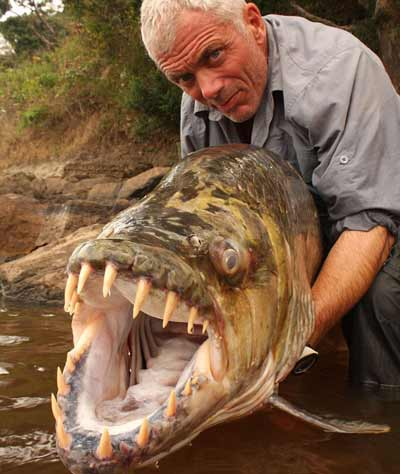 Tiger Fish being held