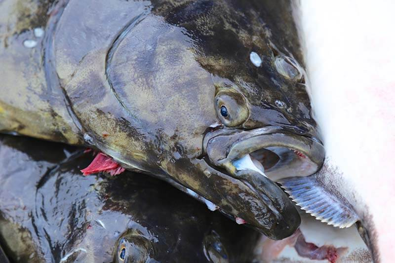 La Push Washington Halibut Charters